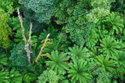 Forêt primaire – Australie