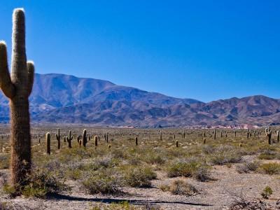 Desert bolivien