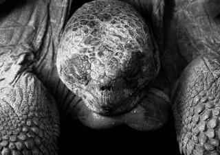 Tortue centenaire – Iles Galapagos