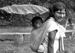 Forêt amazonienne – Equateur